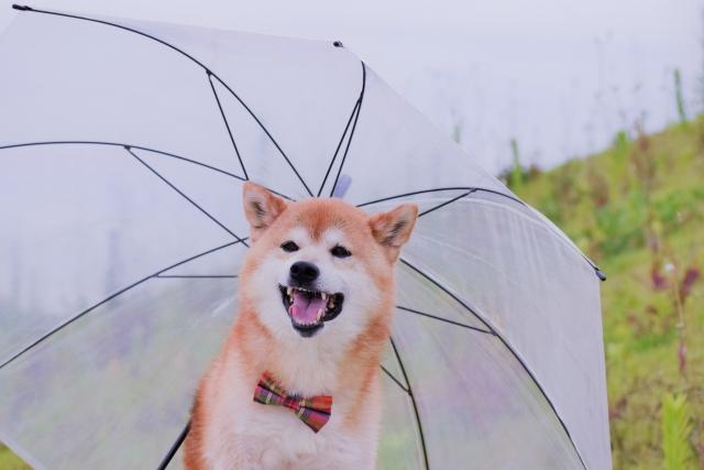 突然の雨にあると助かるアイテム
