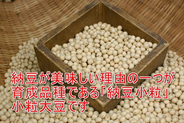 04-04_茨納豆が美味しい理由の一つが育成品種である「納豆小粒」小粒大豆です
