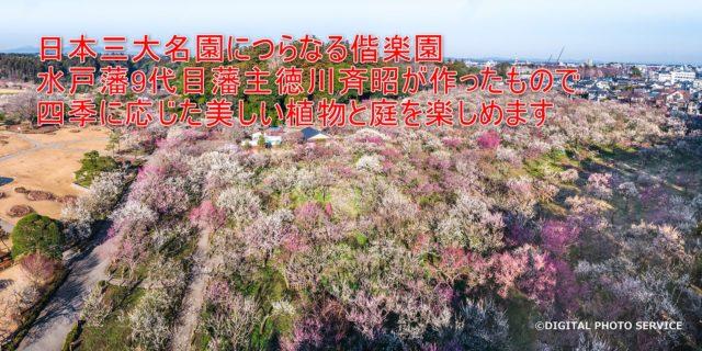 02-03_日本三大名園につらなる偕楽園水戸藩9代目藩主徳川斉昭が作ったもので、四季に応じた美しい植物と庭を楽しめます