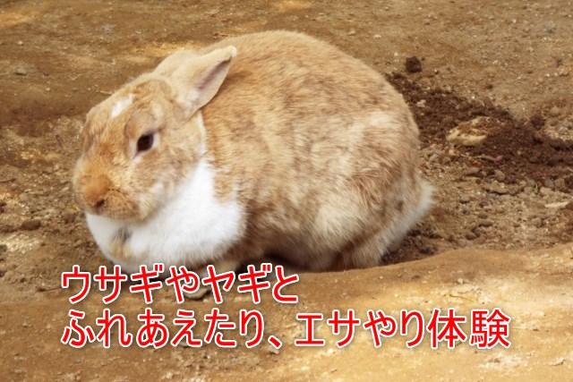 03-07-01_小動物公園