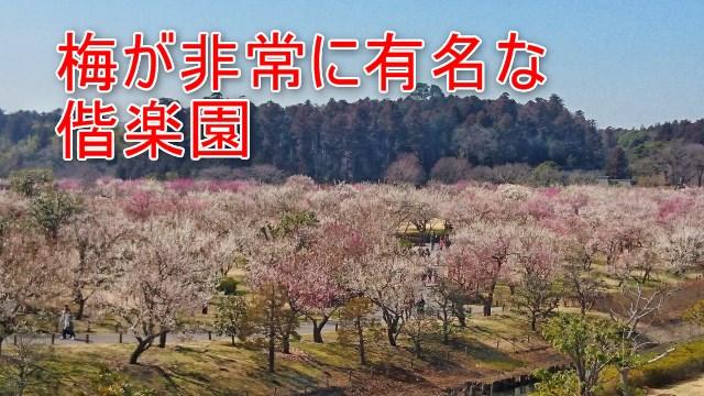 梅が非常に有名な偕楽園